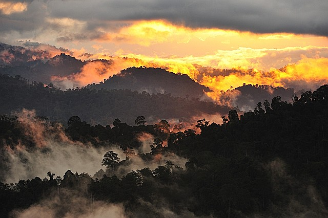 Danum Valley Sunset