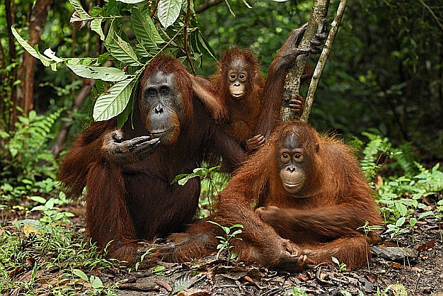 Borneo Filming and Photography